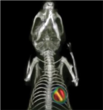 Albira Preclinical PET SPECT CT System