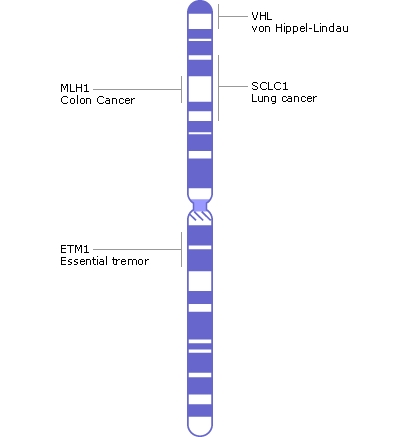 What Is Chromosome 3