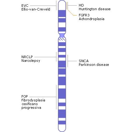 the divastatin hereditary huntingtons disease essay Huntington's disease essay example - huntington's disease is a degenerative neurological the divastatin hereditary huntington's disease essay - huntington's.