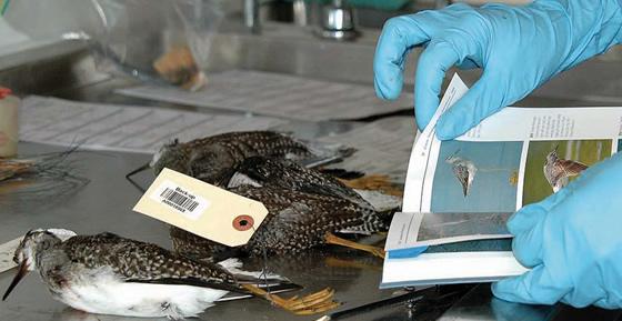 la gripe aviar sintomas de diabetes