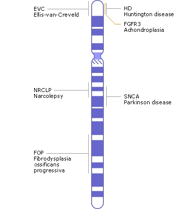 ITS NOT MY FAULT: Health: What is? Chromosome 4?