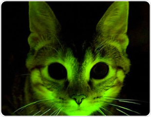 http://www.news-medical.net/image.axd?picture=2011%2F9%2Fglow+cat.png