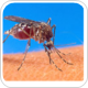 Researchers observe how West Nile virus is transmitted between mosquito generations