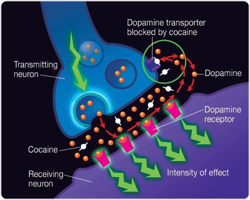Dopamine Biochemistry