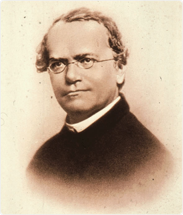 gregor mendel a roman catholic monk You have full text access to this onlineopen article remembering johann gregor mendel: a human, a catholic priest, an augustinian monk, and abbot.