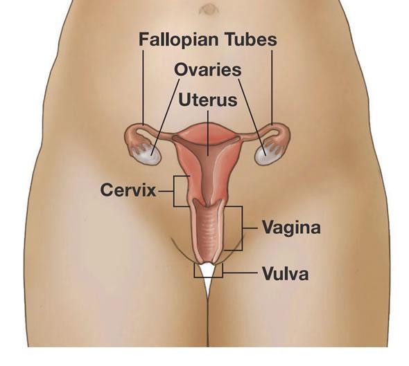 Cervix and vagina squamous cells