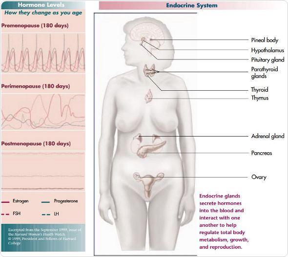 diseases conditions perimenopause symptoms causes