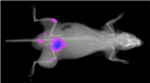 In Vivo Xtreme Optical and X-ray Small Animal imaging System