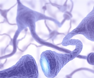 New research describes genetic switches that ignite axon formation