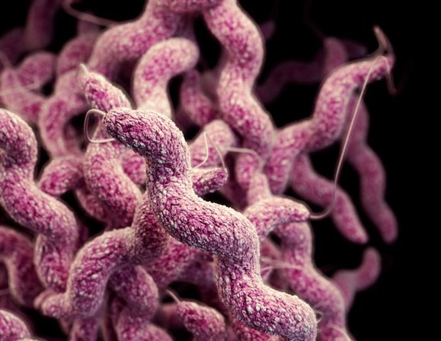 Campylobacter continues to be leading cause of foodborne infections in Denmark