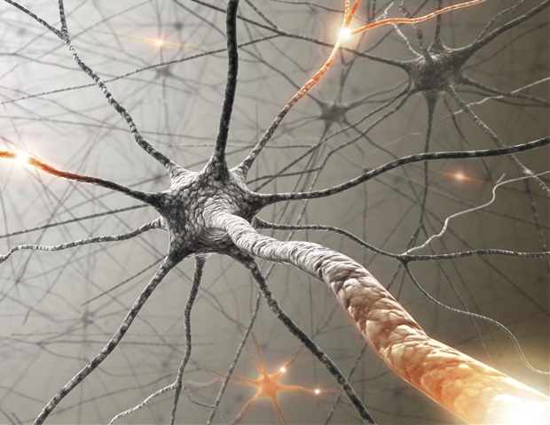 Blood vessels communicate with sensory neurons to regulate their proliferation