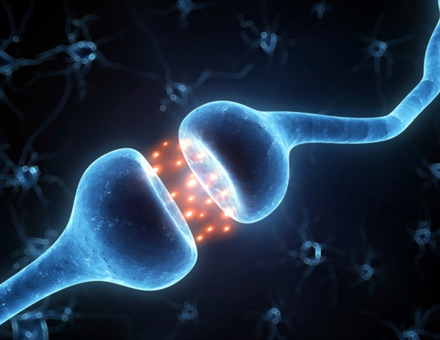 neurontin brain synapses study