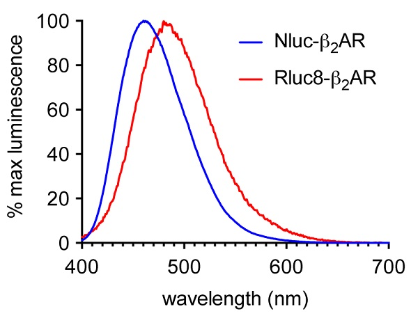 Normalized emission spectra of HEK293 cells expressing ß2AR N-terminally labeled with either Nluc (blue) or Rluc8 (red) using the CLARIOstar. Data previously published in Stoddart et al.