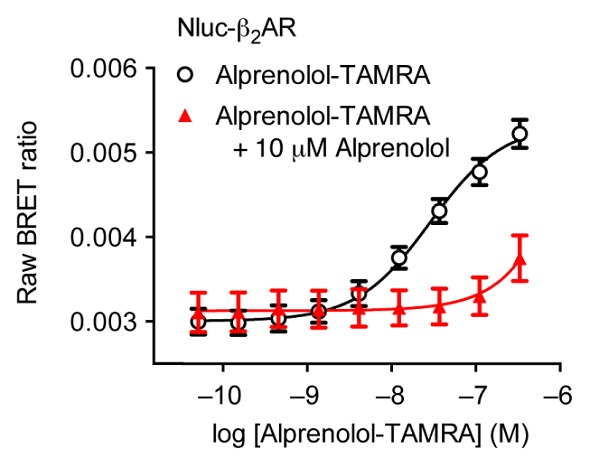 Saturation binding experiment using HEK293 cells expressing Nluc-ß2AR with increasing concentrations of alprenolol-TAMRA (black) and with increasing concentrations of alprenolol-TAMRA in the presence of a high concentration of unlabelled alprenolol (red). Data previously published in Stoddart et al.