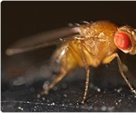 Panasonic Cooled Incubators Provide Flexible Programming for Fruit Fly Incubation