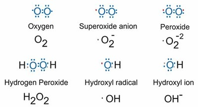 Glutathione peroxidase structure