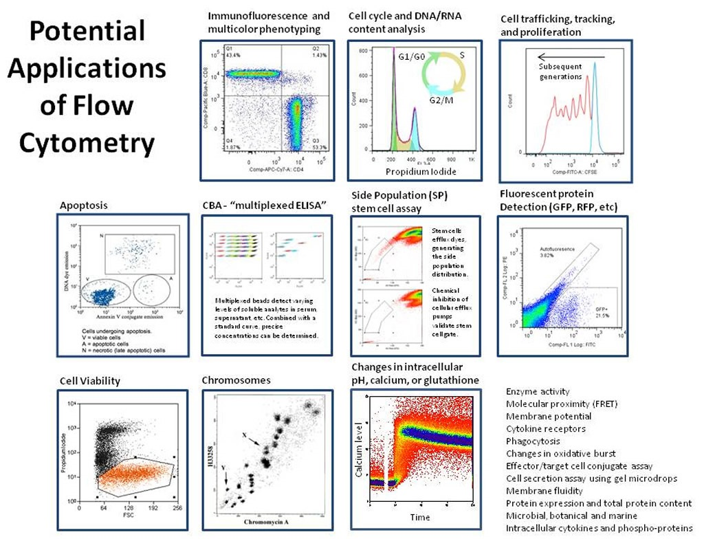 Using centrifugal elutriation and flow cytometry to answer