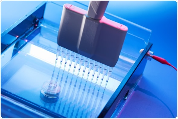 gel electrophoresis research paper Beta lactoglobulin isolation research paper - download as pdf file preparation was checked by sodium dodecyl sulfate polyacrylamide gel electrophoresis.