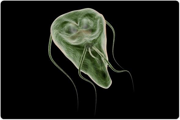 Giardiasis parasite symptoms