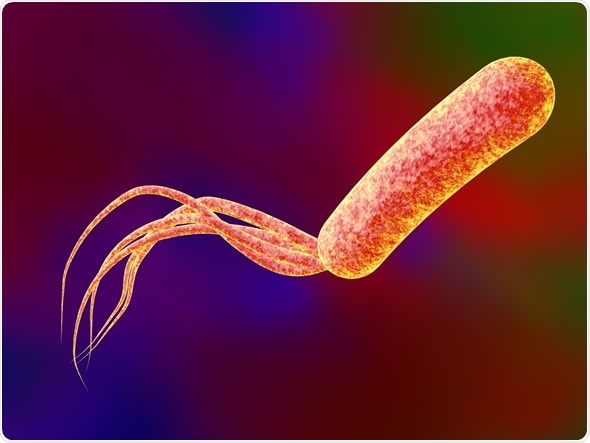 Digital illustration of bacteria Pseudomonas aeruginosa, model of bacteria, realistic illustration of microbes - Image Copyright: Kateryna Kon / Shutterstock