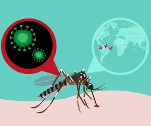 Researchers unravel how Zika virus manipulates the human immune system