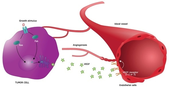 Mechanism of survival and growth of a cancer cell: angiogenesis