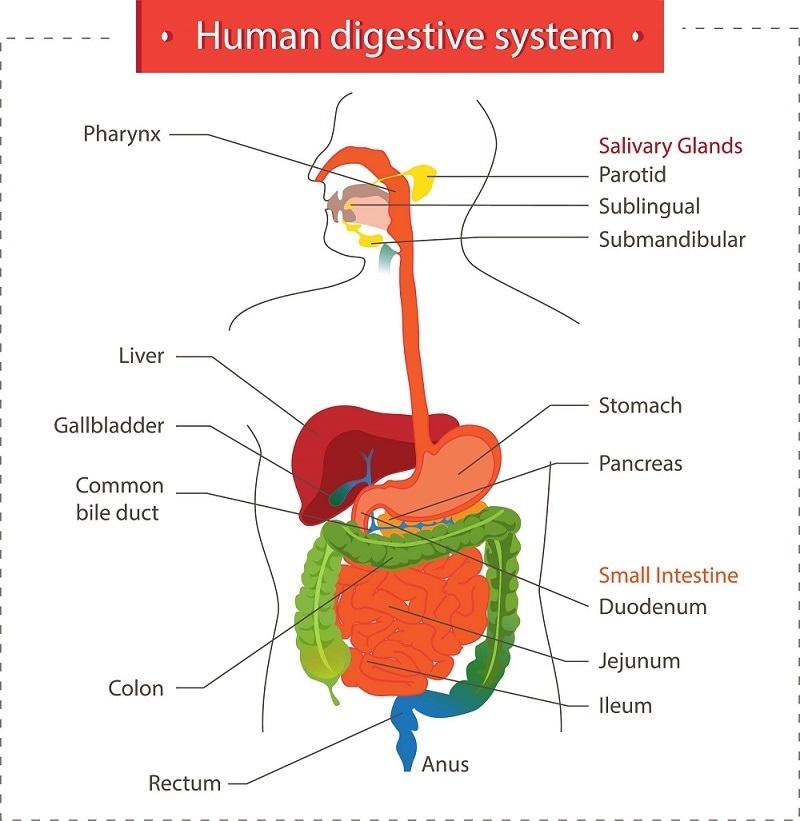 acidez de estomago sintomas de diabetes