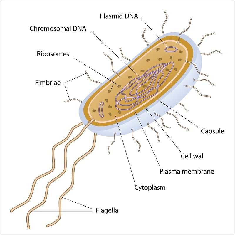 Eukaryotic And Prokaryotic Cells  Similarities And Differences
