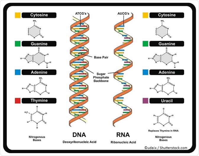 What Is The Rna World Hypothesis