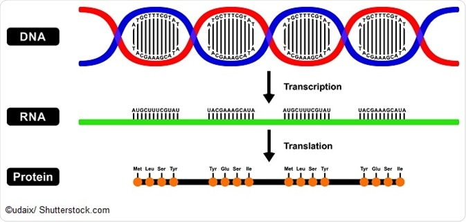 amino acids and protein sequences
