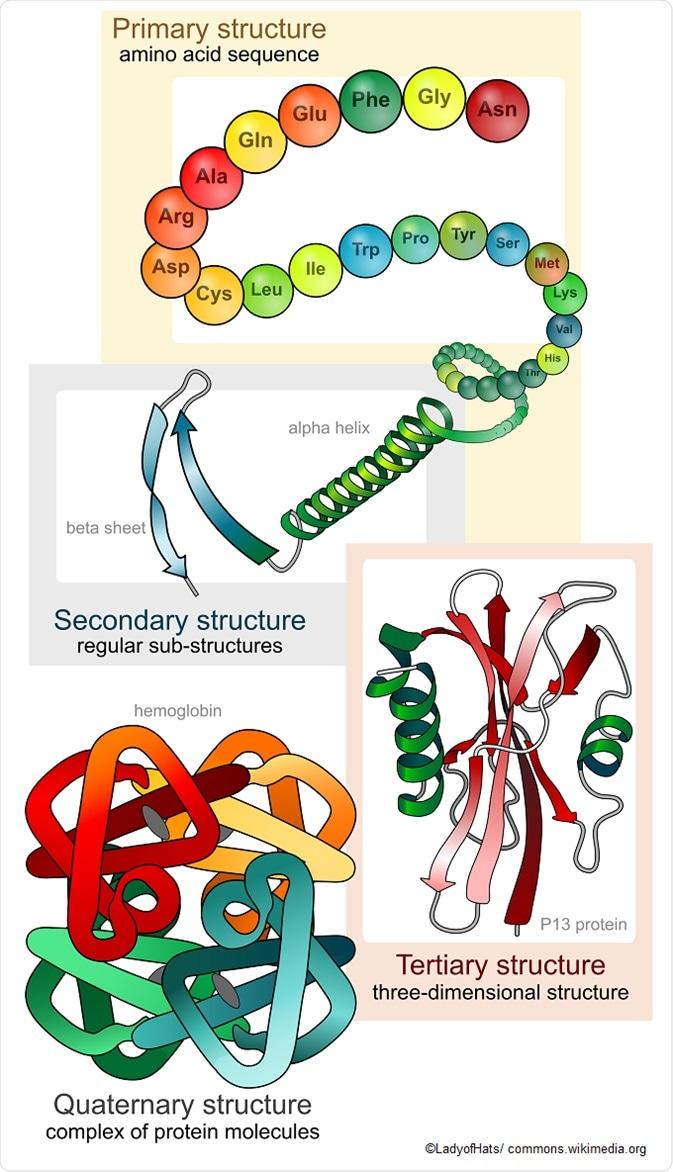 Estructura Y Función De La Proteína