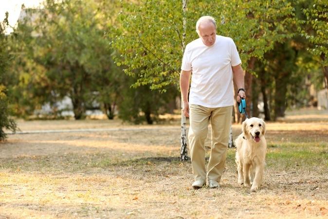 elderly dog owner walking ile ilgili görsel sonucu