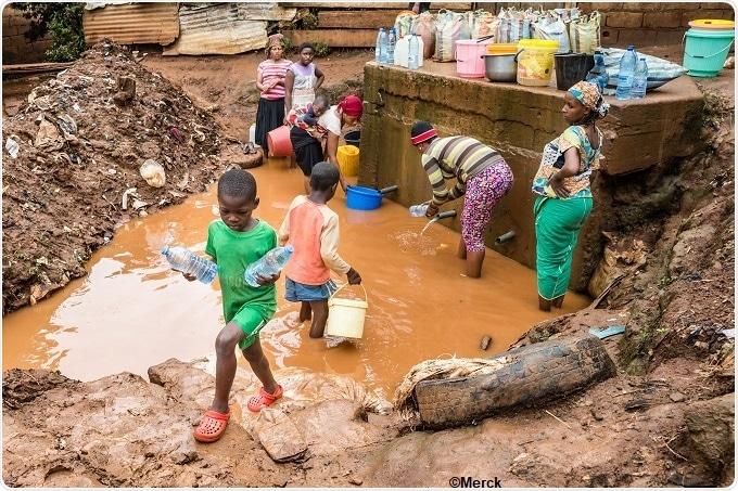 schistosomiasis news