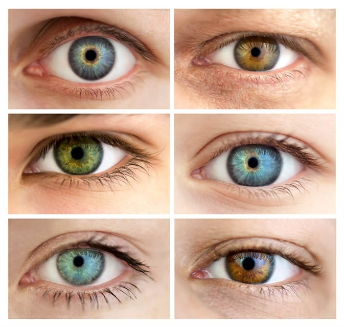 Genetics Of Eye Color