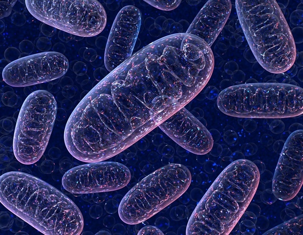 Bioluminescent molecule in fireflies shines light on mitochondrial activity - News-Medical.Net