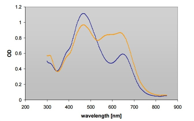 Absorbance scan (300-900 nm) of BioRad Protein assay reagent with (▬) and without (▬) BSA on Infinite M200 reader.