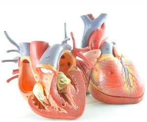 Johns Hopkins scientists successfully perform 3D personalized virtual simulations of the heart