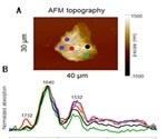 Using AFM to Visualize Lipid Content in Stratum