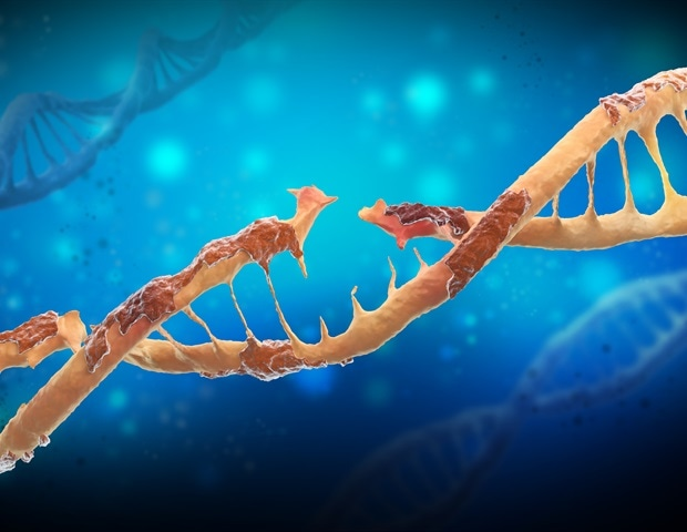Some types of proteins can stabilize damaged DNA