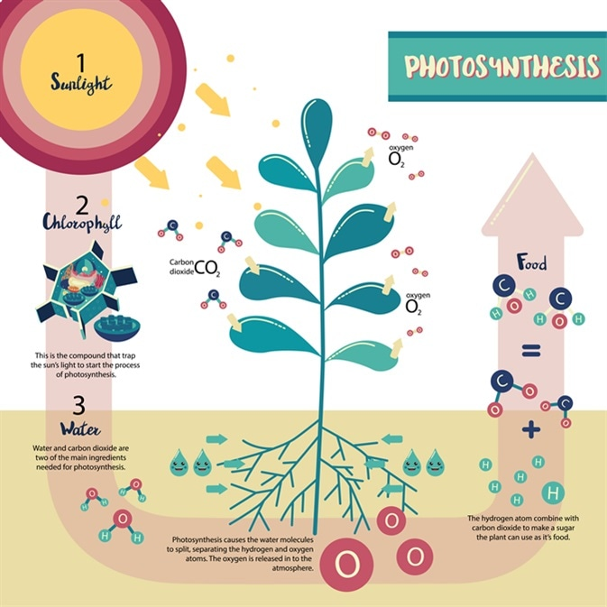 Experiments to show the factors required in photosynthesis (2) - light and carbon dioxide