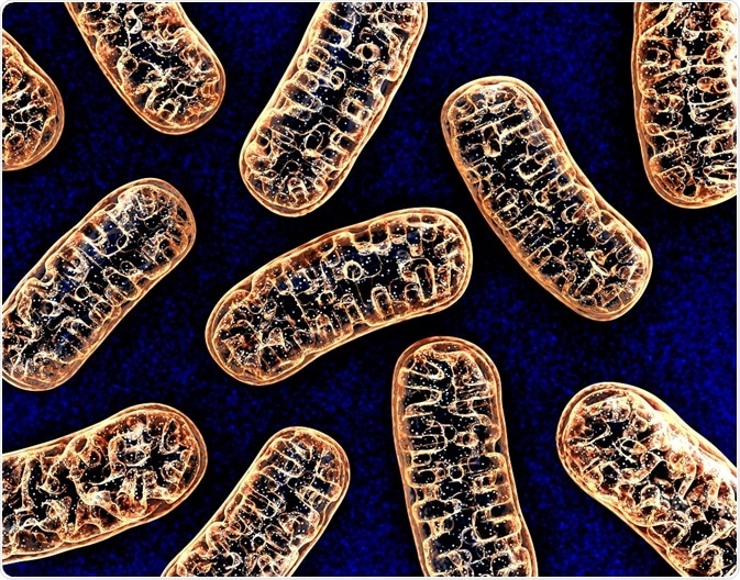 Mitochondria Overview