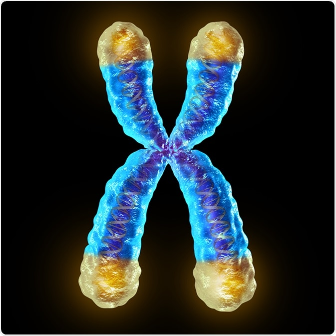 Scientists create age-resistant mice with hyper-long telomeres