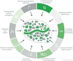 Key Markers and Tools to Explore the Hallmarks of Cancer