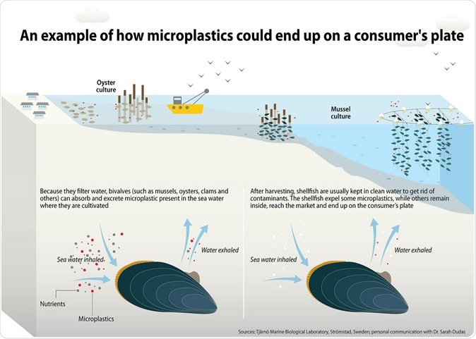 An example of how microplastics could end up on a consumer's plate. Image Credit: Marine Litter Vital Graphics, Cartographer: Maphoto/Riccardo Pravettoni
