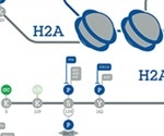 Abcam's New Poster on DNA and Histone Modifications