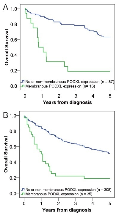 Kaplan–Meier estimates of five-year Overall Survival (OS) according to PODXL expression in (A) Cohort I and (B) Cohort II.