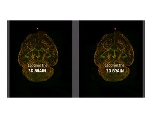 New 3D imaging technique helps track satiety hormone