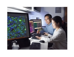 Scientists reprogram mature inhibitory neurons into dopaminergic cells