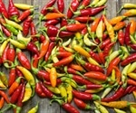 Metabolomic Analysis of Chilli Peppers