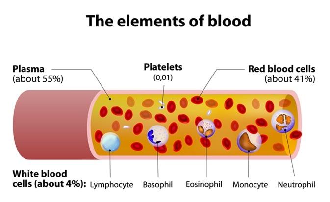 blood plasma components and function. Black Bedroom Furniture Sets. Home Design Ideas